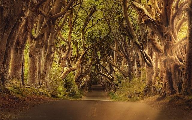 trees-3464777_640-min