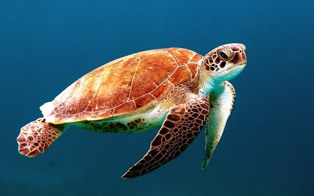 turtle-863336_640-min